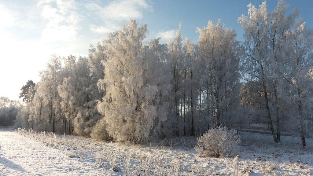 tio frågor om vintern