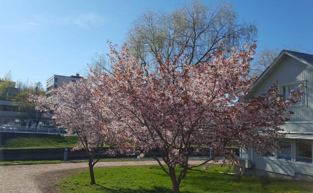 skärpning våren